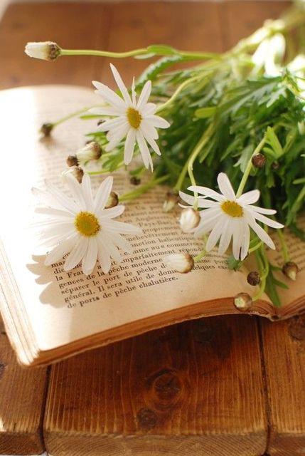 頑張れ受験生! 落ちない花・マーガレットで応援します | home | Pinterest | Daisy love, Daisy and Flowers (54666)