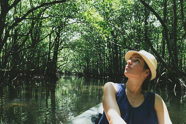mangrove canopy from kayak,...
