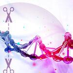 動画で学ぼう!CRISPR/Casノックイン実験に最適なDNAテンプレートの選択方法