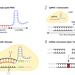CRISPR/Cas9システムってなに?  -正確で効率がよく、なおかつ簡単なゲノム編集ツール-