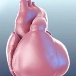 臓器の動態を3DモデリングしたUT-Heart