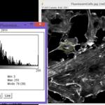 シリーズ3.ImageJマクロ言語を用いた画像解析~①輝度の統計量 ~
