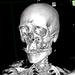 VR解剖アプリを作る その1 ~CTスキャンの結果から3Dデータを得る~