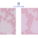 スパースモデリングに基づく画像の再構成 Part1. L1ノルム最小化に基づく画像再構成の実装