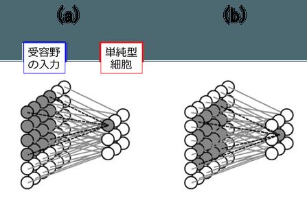 図4. 単純型細胞のモデル