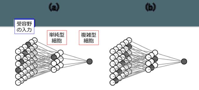 図5. 複雑型細胞のモデル