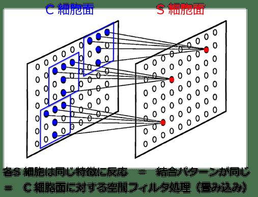 図2. C細胞面とS細胞面間の結合を表す模式図