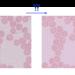 スパースモデリングに基づく画像の再構成 Part1. L1ノルム最小化に基づく画像再構成の実装 - IMACEL Academy -人工知能・画像解析の技術応用に向けて-|LPixel(エルピクセル)