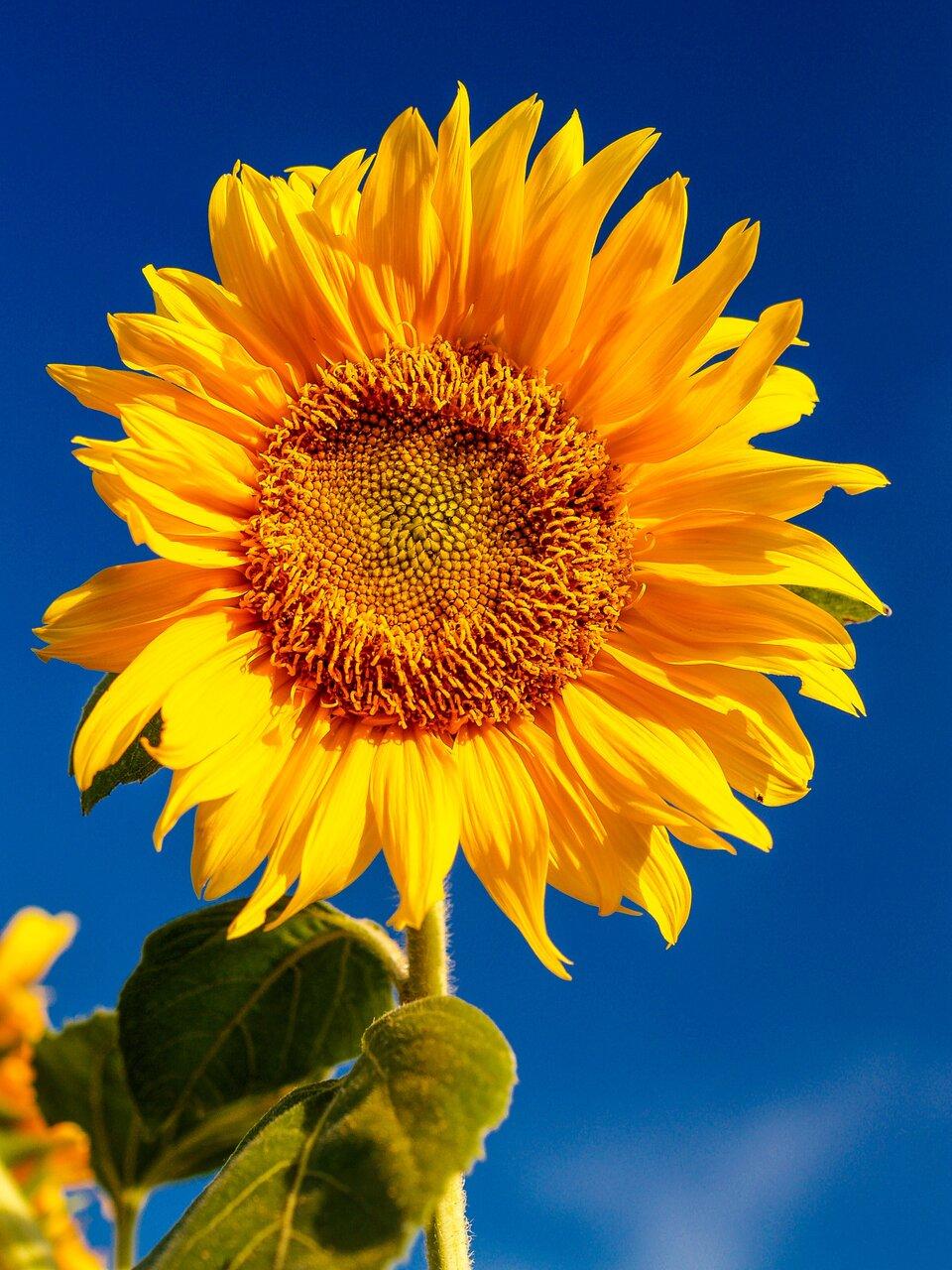 真夏の太陽を浴びよう!!