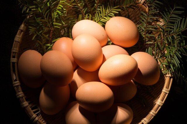 卵かけご飯との相性が最高の「さくらこめたまご(国産)」の写真素材