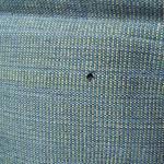 【よく見ると】着物の虫食い予防法【大きな穴が!?】