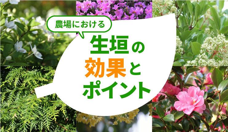 生垣には減臭の効果も!畜産農場に適した植物と植え方のポイントとは