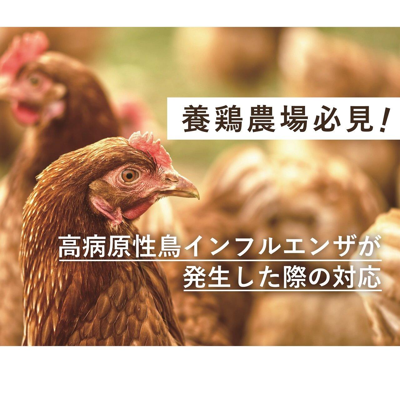 養鶏農場必見! 近隣農場で高病原性鳥インフルエンザが発生した際の対応