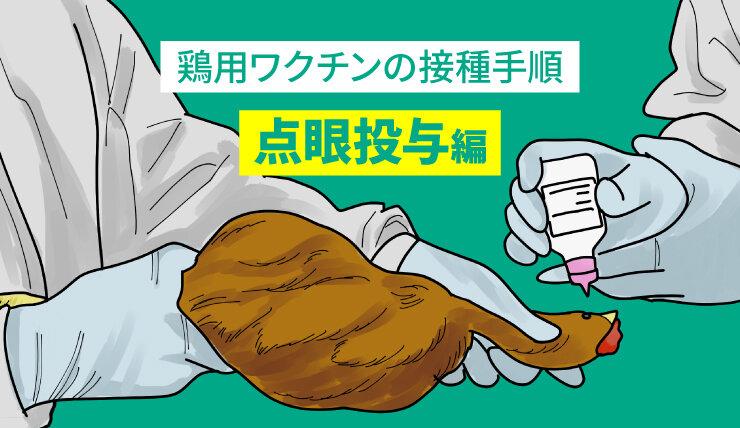 鶏用ワクチンの接種手順 ー点眼投与編ー