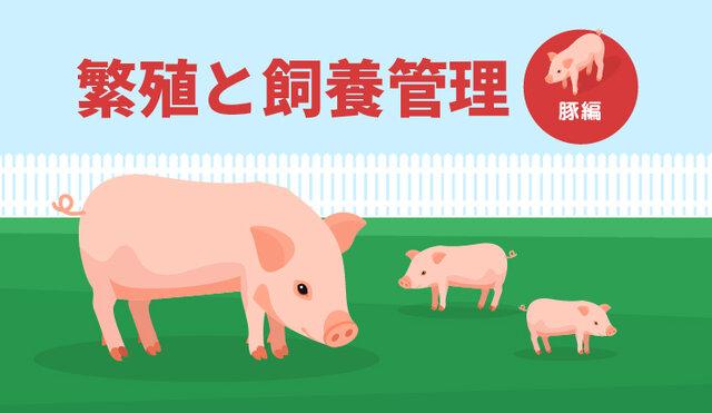 繁殖と飼養管理 ー豚編ー