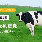 乳房炎について学ぶ【第1回】乳牛の乳房炎 ~日本の現状~