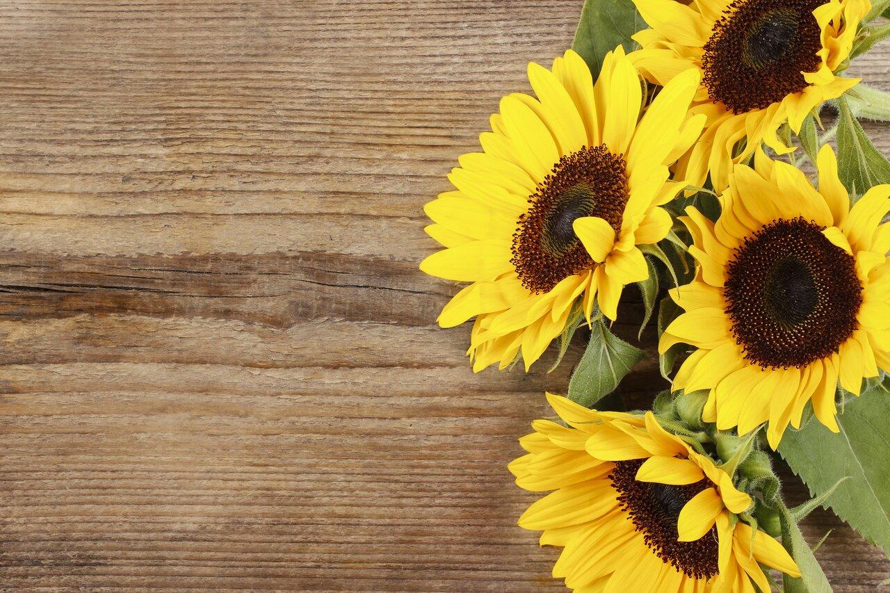 テーブルに置かれたひまわりの花束