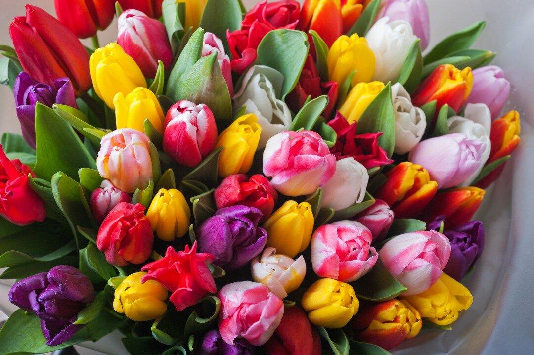カラフルなチューリップの花束