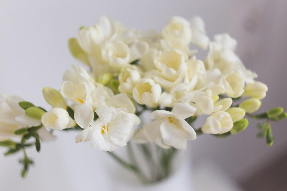 白いフリージア