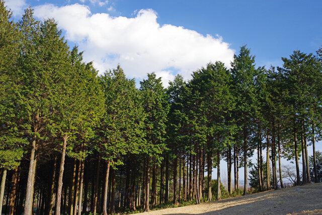 ヒノキのアロマのおすすめアイテム15選をご紹介!心が癒される森林の香り