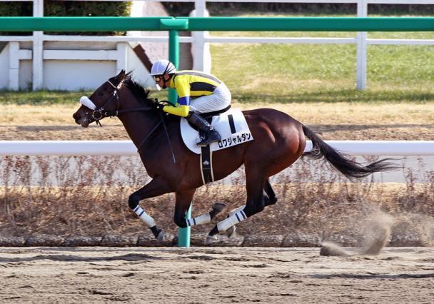 ◯ロワジャルダン(牡5・戸田博文厩舎)