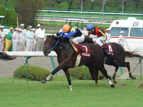2004年9月26日 神戸新聞杯 芝2400m 東京競馬場