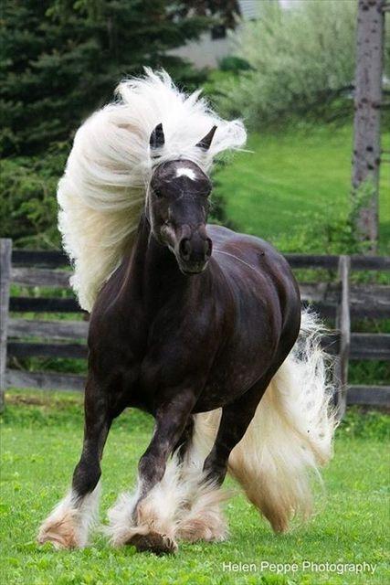 白の髪タレント