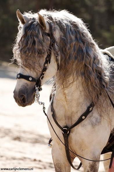 馬界のジョニーデップ