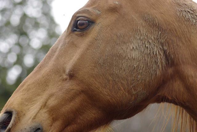 純粋な馬の横顔