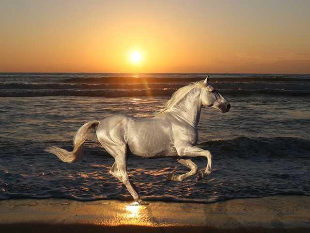 空と海と太陽と白馬