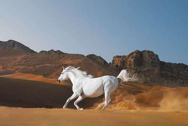空と山と砂漠と白馬