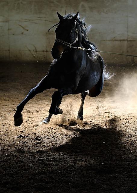 跳ね上がる土と黒馬