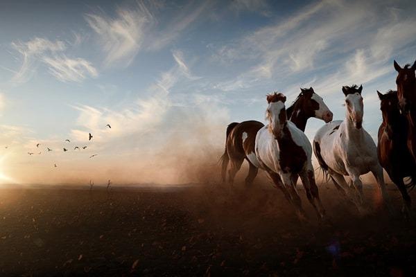 空と鳥と土と馬群