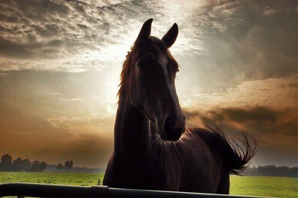 牧場と後光と馬