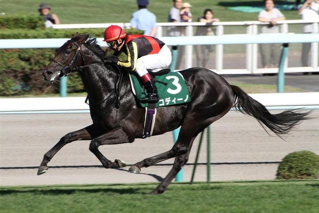 コディーノ(ハッピーパス2010)