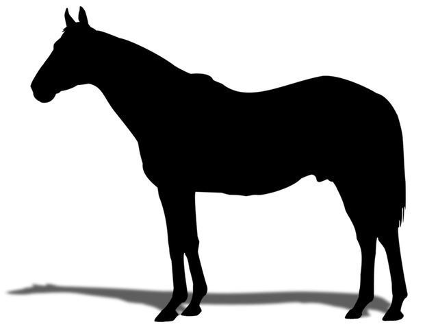 クロカミ2014 ♀ (馬名:チトニア)