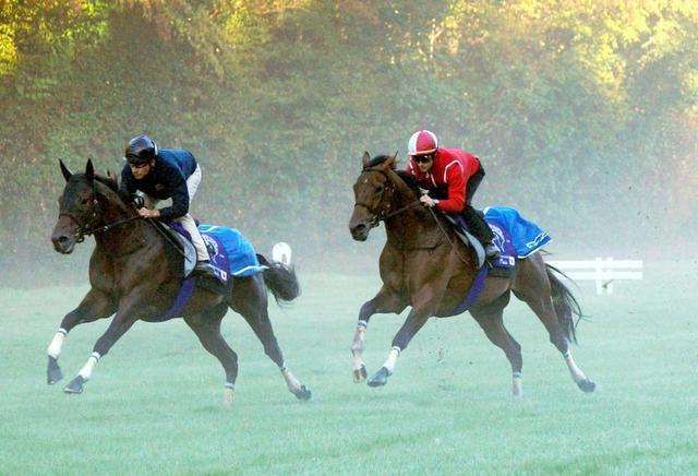 ルメール騎手を背に調教を受けるマカヒキ(右)