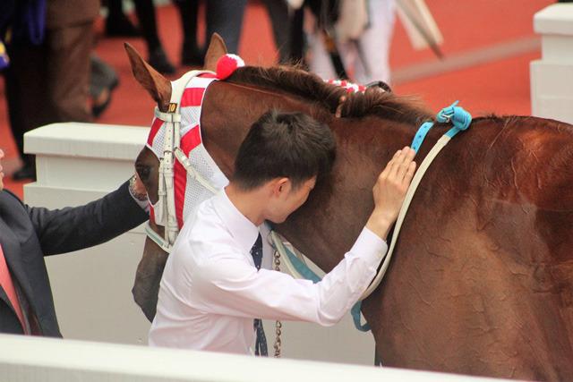 レーヌミノルに寄り添い愛馬を労う中井助手