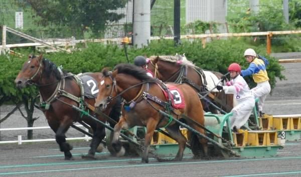 世界で唯一『ばんえい競馬』が開催される帯広競馬場