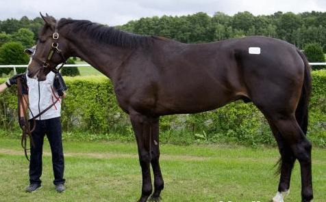 遠近感の影響もあるが馬体は相当大きい