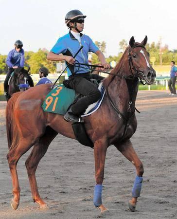 500kg近い馬格で他の新馬を圧倒するロックディスタウン