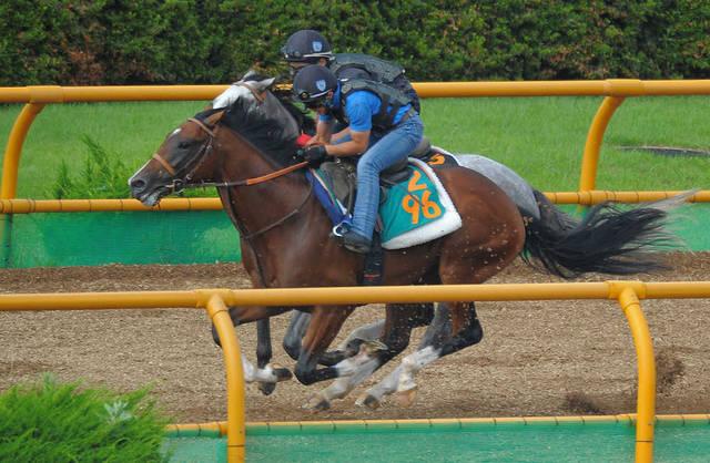 躍動感ある動きで格上馬に先着するルーカス