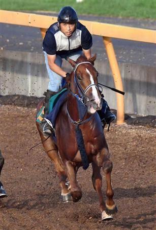躍動感ある走りで併走馬を圧倒するムスコローソ