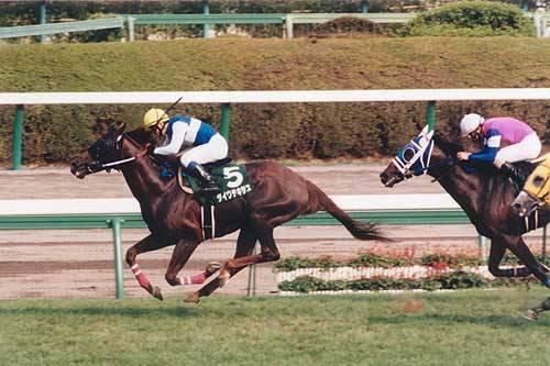 2000年08月27日 新潟記念 芝2000m 中山競馬場