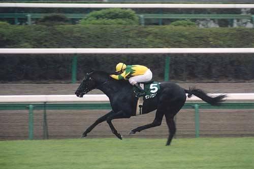 2001年09月09日 京成杯オータムハンデ 芝160...