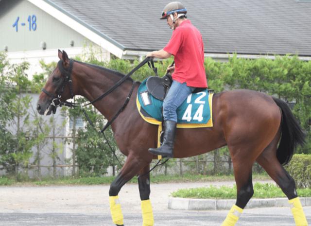 堂々たる馬体と風格のレッドヴェイロンが初陣