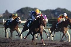 2001年01月29日 根岸ステークス ダート1400...