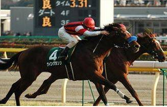 2005年02月13日 ダイヤモンドステークス 芝34...