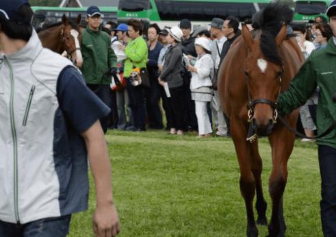 募集馬ツアーでも大きな注目を集めたヴィルトゥース