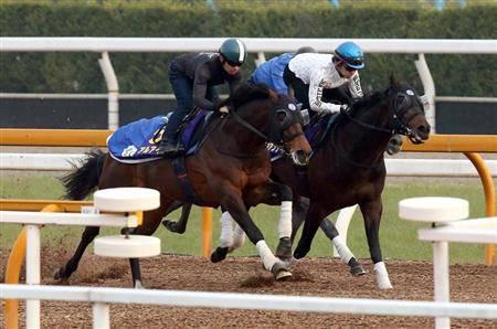 僚馬ペルシアンナイトと豪華な併せ馬を行うアルアイン